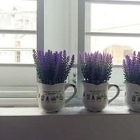 Chậu hoa Vintage Lavender ly gốm No.18