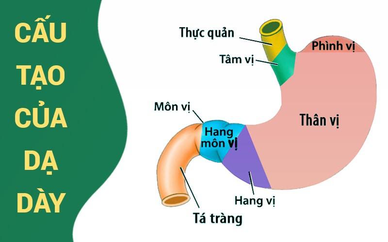 vi khuẩn hp - nguyên nhân hàng đầu gây đau dạ dày