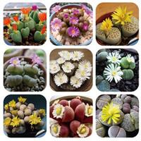 Hạt giống hoa Aizoaceae