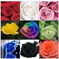 Hộp hạt giống hoa hồng