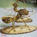 Đôi Kiến Vàng handmade - KV1403