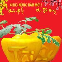 Dưa Hấu Thỏi Vàng Chữ Việt loại 2,2kg GIÁ 1 CẶP
