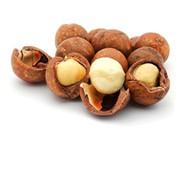 Hạt Macadamia nhập khẩu