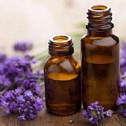 Tinh dầu Lavender oải hương Thư Lê 10ml
