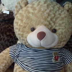 Bán gấu Teddy lông xoắn siêu bự 1m2