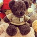 Gấu bông Teddy Shy