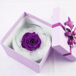 Lọ hoa hồng bất tử tím