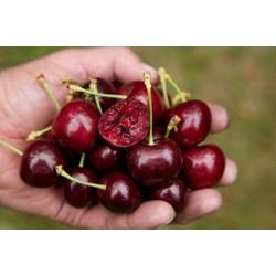 Nhận order Cherry Size 32