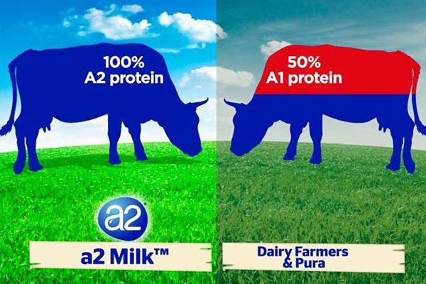 Sữa A2 là gì, sữa a1 là gì