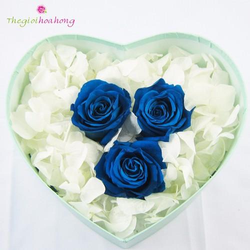 Hộp trái tim hoa hồng xanh vĩnh cửu