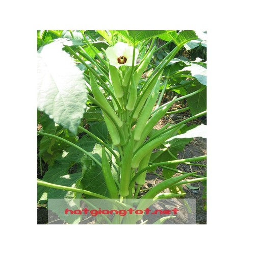 Hạt giống đậu bắp xanh - 3962849 , 3411340 , 15_3411340 , 20000 , Hat-giong-dau-bap-xanh-15_3411340 , sendo.vn , Hạt giống đậu bắp xanh