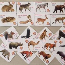 Bộ thẻ 16 chủ đề cho các bé học hỏi