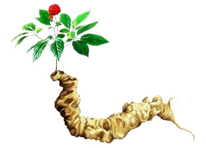 Kem dưỡng da sâm ngọc Linh -  cream SMARTCOS SKginseng 3