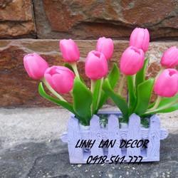 Hoa đất sét tulip