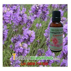 Tinh dầu Lavender - Oải hương
