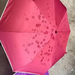 Ô nở hoa xinh xắn thách thức mưa nắng thất thường