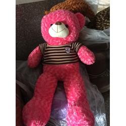 gấu teddy lung linh luôn