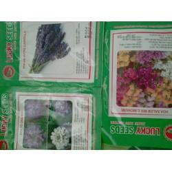 Combo hạt giống hoa các loại oải hương mix
