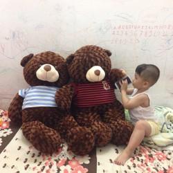 Gấu teddy lông xoắn cực bự