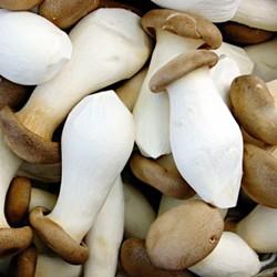 Nấm đùi gà King trumpet mushroom Tiêu chuẩn GAP