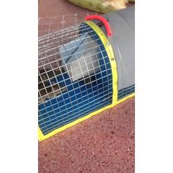 bẫy chuột Thông minh -size nhỏ, YouTube bay chuot giao hang toan Quoc