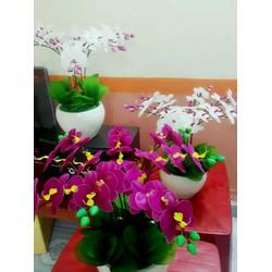 hoa lan pha lê