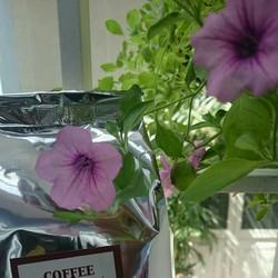 Bột Cafe nguyên chất CFfamily không chất phụ gia
