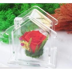 Hoa bất tử Ngôi Nhà Hoa Hồng