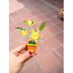 Cây Hoa Trang Trí