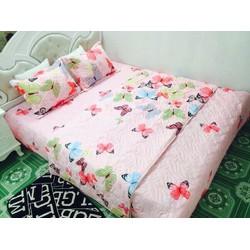 Bộ chăn ga gối cotton hàn quốc bướm hồng BH02