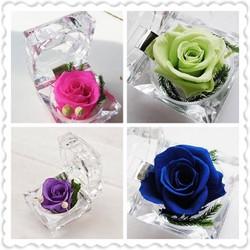 Hoa hồng bất tử JAPAN . hoa thật