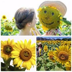 Hạt giống hoa Hướng dương mặt cười