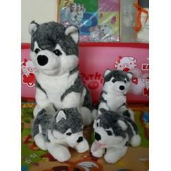 gia đình chó alaska
