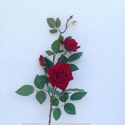 Hoa hồng nhung cổ điển - hoa trang trí