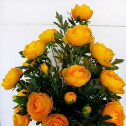 Hoa hồng trà - Hoa trang trí