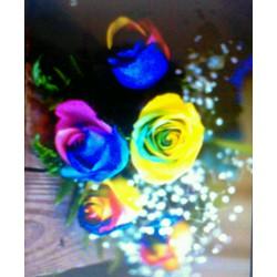 Hạt giống hoa hồng cầu vòng 7 màu