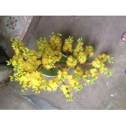 hoa voan bon sai