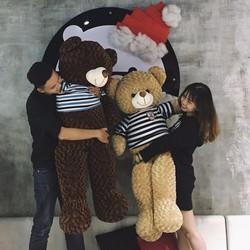 Gấu bông Teddy Nâu Đen 1m6