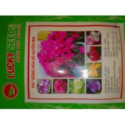 Hạt Giống hoa đỗ uyên