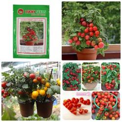 Hạt giống cà chua bi lùn đỏ chery sai quả dễ trồng gói 30 hạt