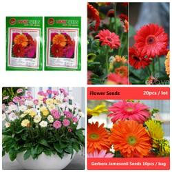 Bộ 02 Hạt giống hoa Cúc Đồng Tiền Mix nhiều màu Gói 10-15 hạt