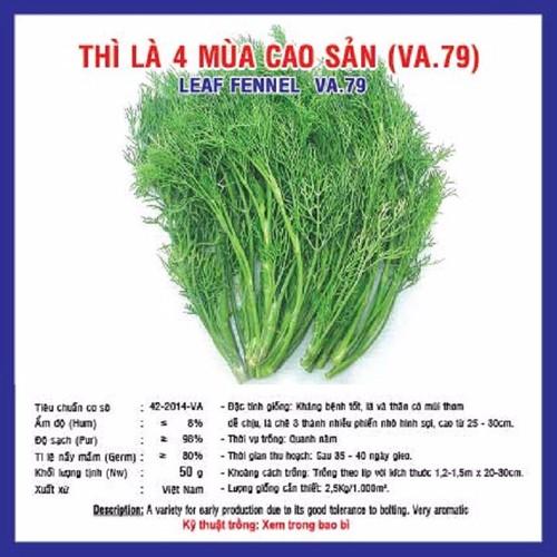 Hạt giống rau thì là 4 mùa gói 20 gram xuất xứ Việt Nam