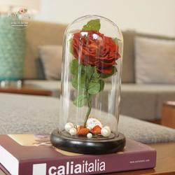 Hoa hồng bất tử Miso