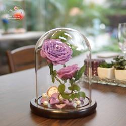 Hoa hồng bất tử Migo