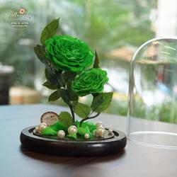 Hoa hồng bất tử Midori
