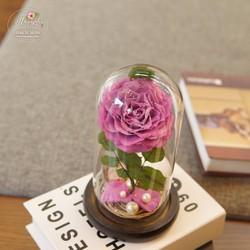 Hoa hồng bất tử Mochi