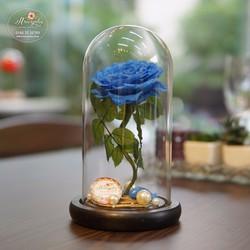 Hoa hồng bất tử Furu