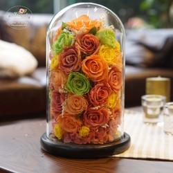 Hoa hồng bất tử Mika