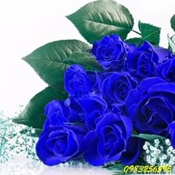 Hạt giống hoa hồng xanh đen gói 5 hạt xuất xứ Đức