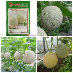 Hạt giống dưa lưới xanh tròn ruột cam gói 10 hạt